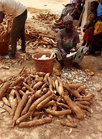 yolse—accueil-manioc